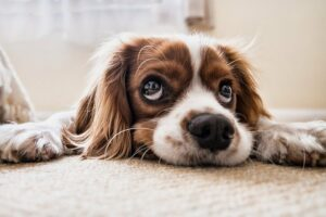 hyper anxious dog